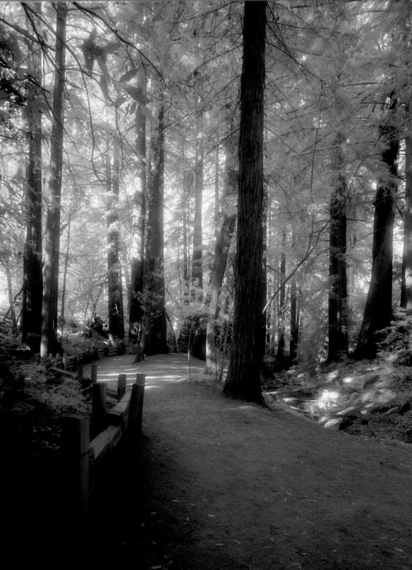Somewhere in the woods around the Big Sur Campground.